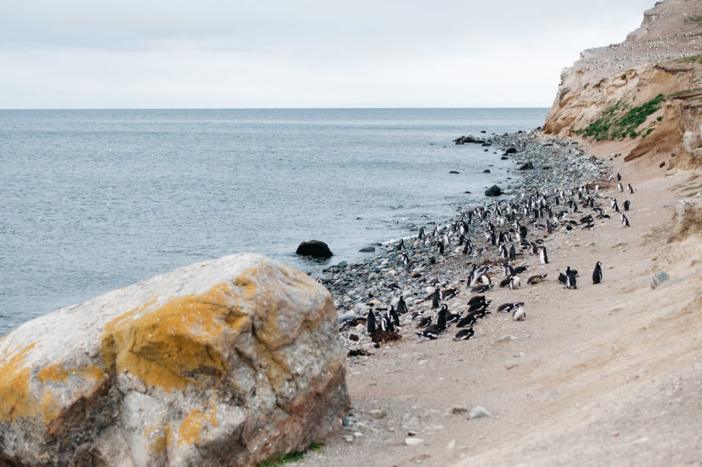 Coast of Isla Magdalena with hundreds of penguins on the shore