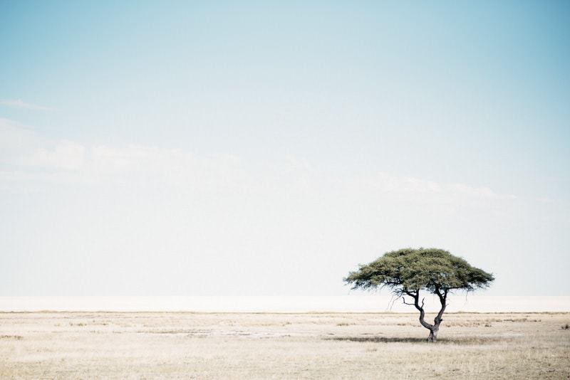 Lonely Tree in Etosha National Park Namibia
