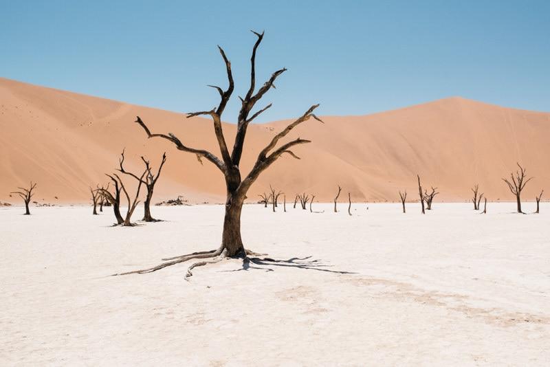All Weather Tires >> Dune 45 & Dead Vlei - Best of Namib Desert