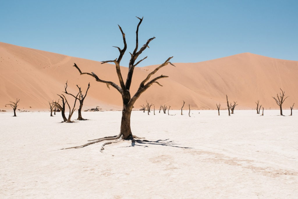 Dead Vlei in Sesriem Cover