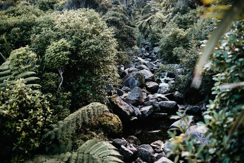Rainforest on Heaphy Track