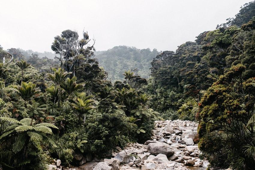 Heaphy Rainforest River