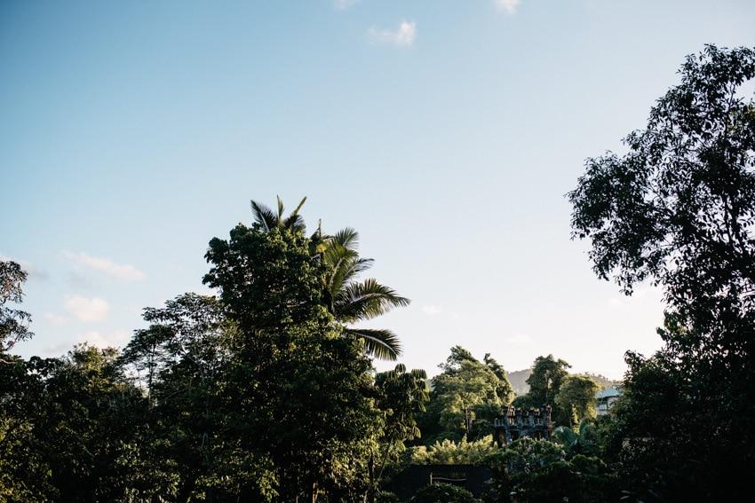 Paronella Park Treetops