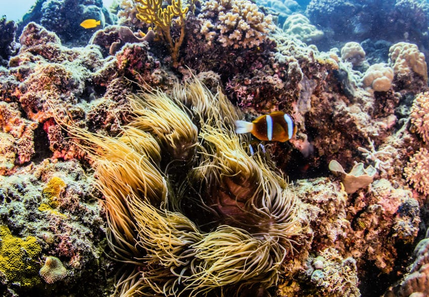 Finding Nemo in Great Barrier Reef
