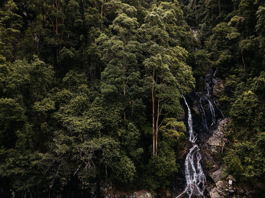 Waterfall in Dorrigo National Park