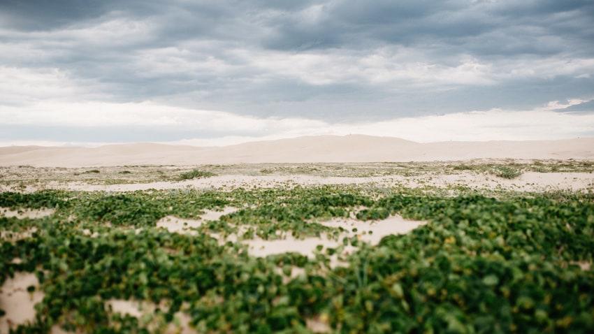 Worimi Regional Park Sanddunes