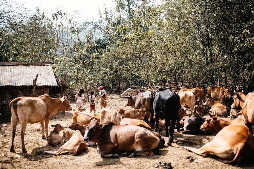 Ban Phathueng Village Trek Green Discovery Tours Landscape 9