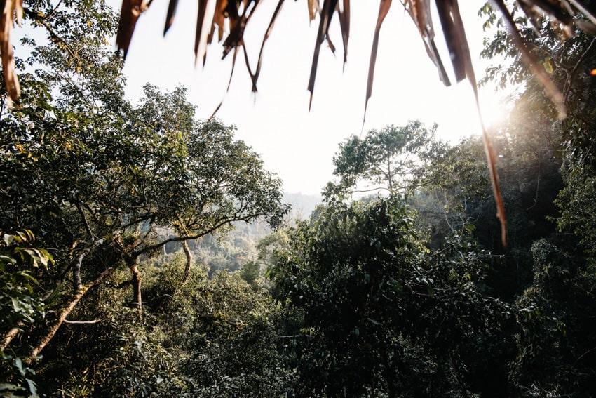 Gibbon Experience Nam Kan National Park 1