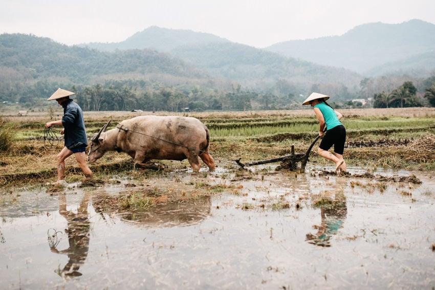 Lao Living Land Company Luang Prabang 1
