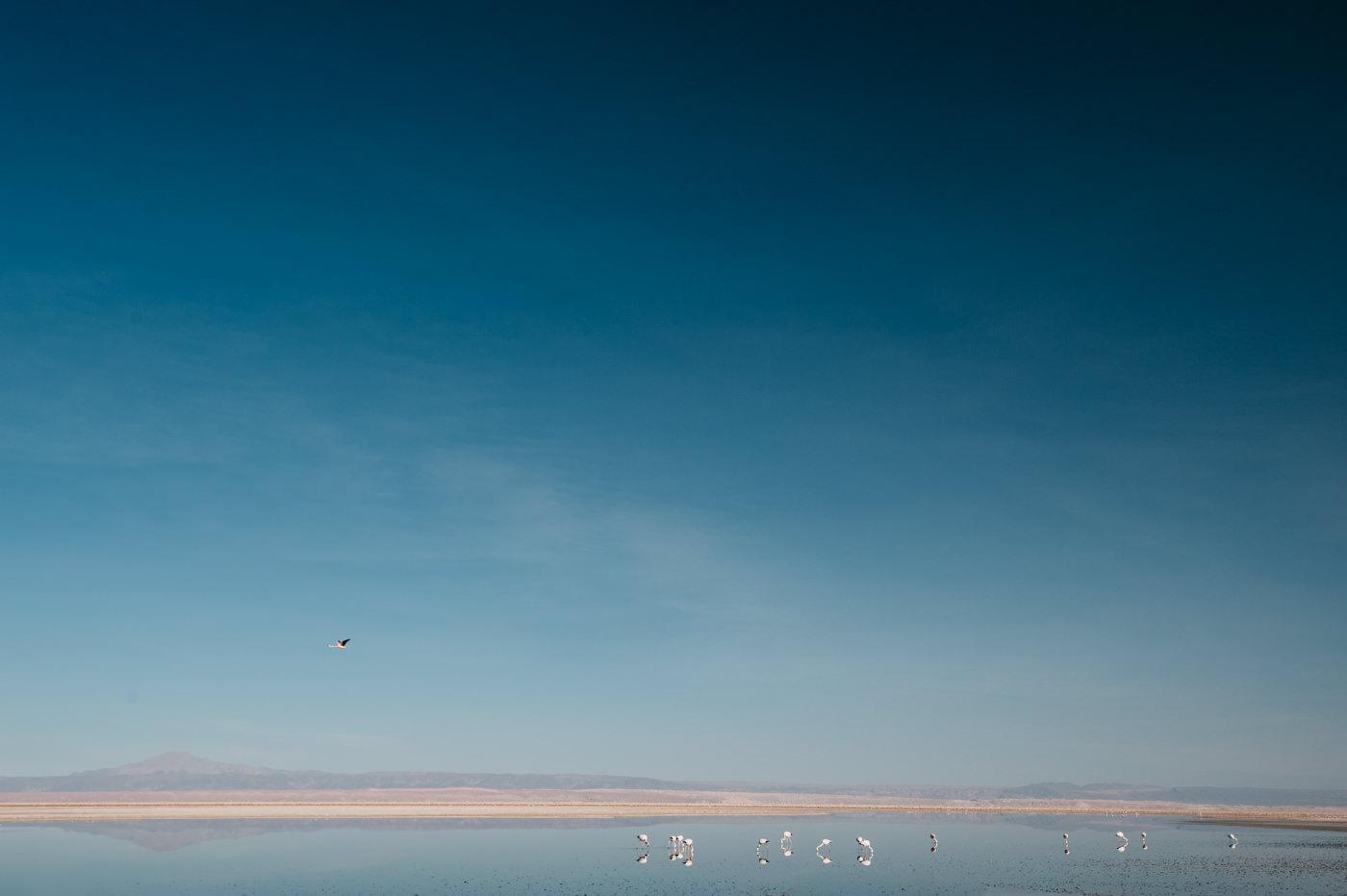Chile Atacama Laguna Chaxa Flamingos