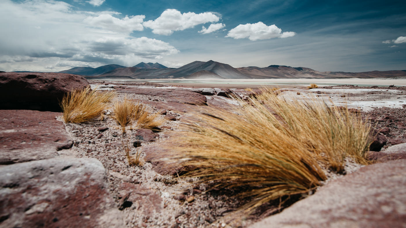 Chile Atacama Piedras Rojas Low Angle with Bushes