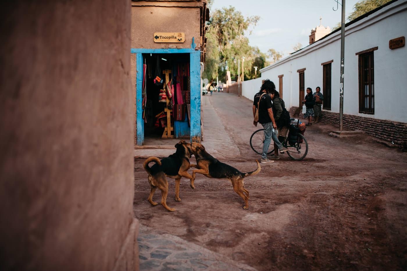 Chile San Pedro de Atacama wild dogs in the streets