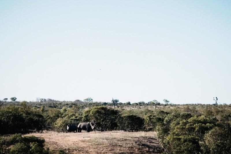 Kruger-National-Park-Safari-Rhino