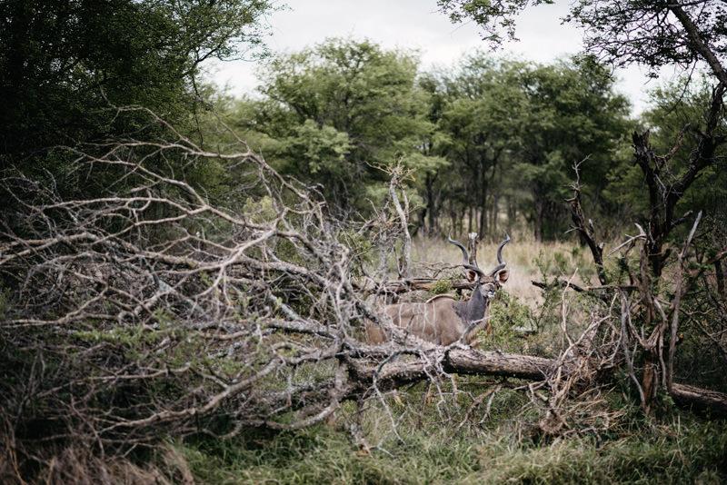 Kruger-National-Park-Safari-