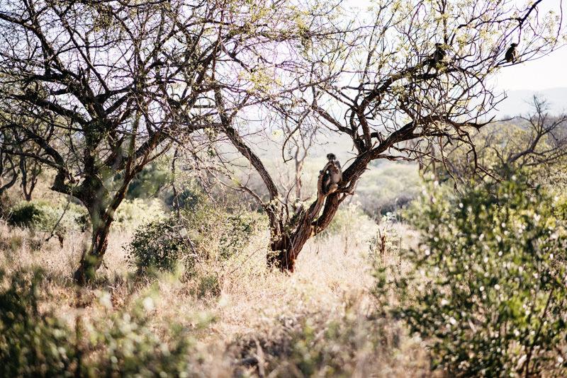 UMkhuze-Game-Reserve-Monkey