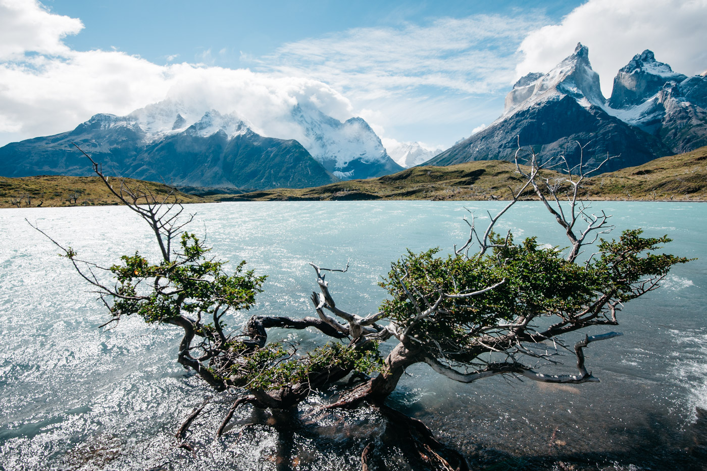Torres del Paine with a tree in the foreground