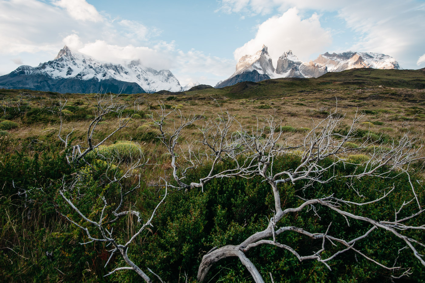 Torres del Paine at sunset with weathered wood in foreground
